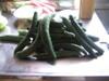 Cucumber_frenzy